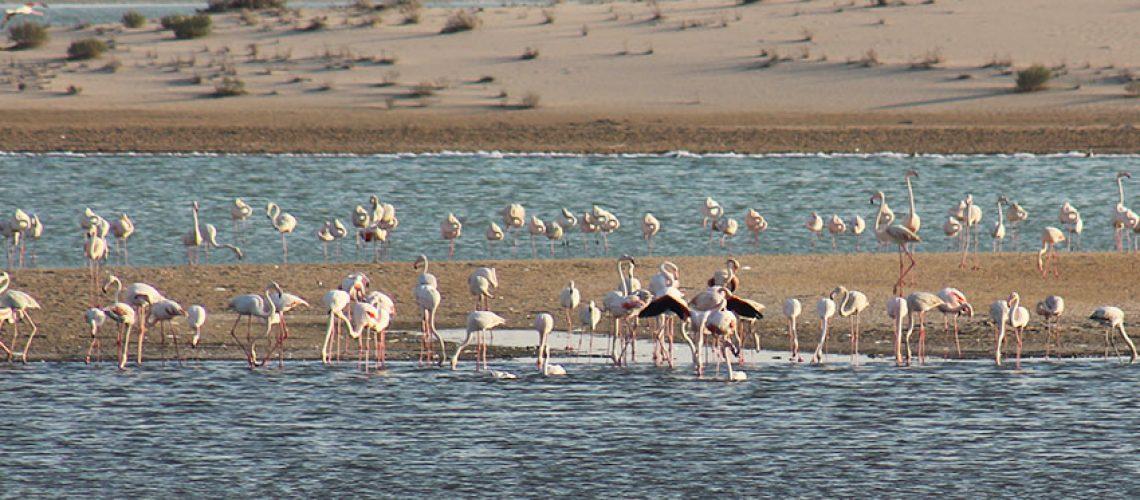 Al Wathba Wetland
